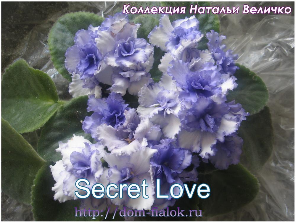 фиалка Secret Love