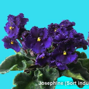 Josephine (Sort industrial)
