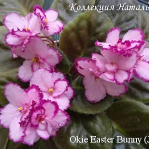 Okie Easter Bunny (J. Cochran)