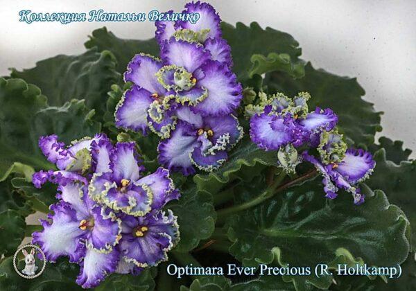 Optimara Ever Precious (R. Holtkamp)