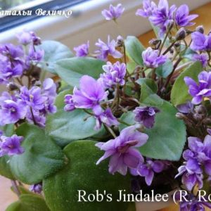 Rob's Jindalee (R. Robinson)