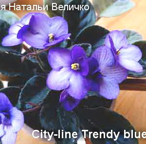 City-line Trendy blue