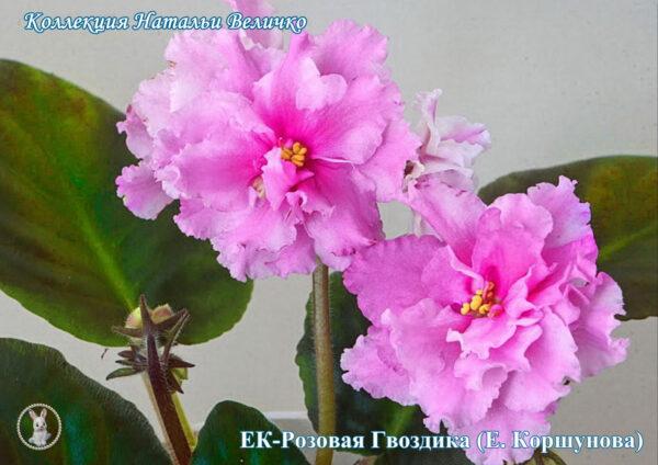 ЕК-Розовая гвоздика (Е. Коршунова)