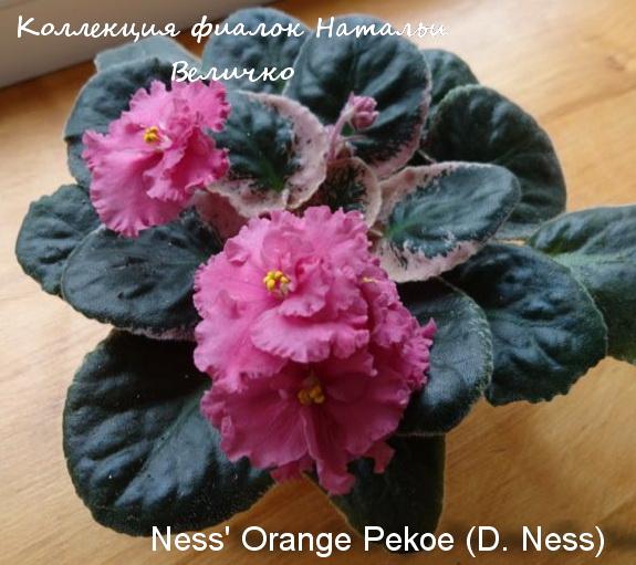 Ness Orange Pekoe (D. Ness)