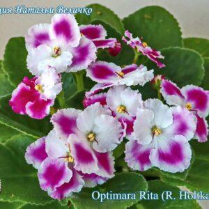 Optimara Rita (R. Holtkamp)