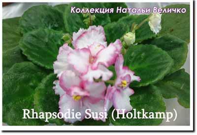 Rhapsodie Susi (Holtkamp)
