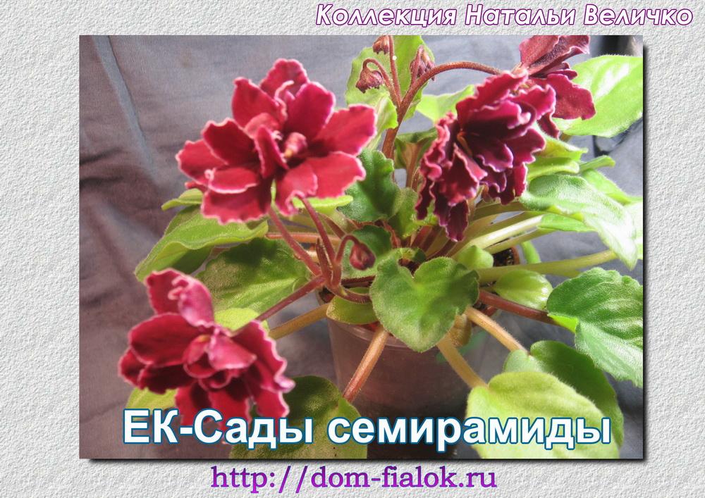 ЕК-Сады Семирамиды