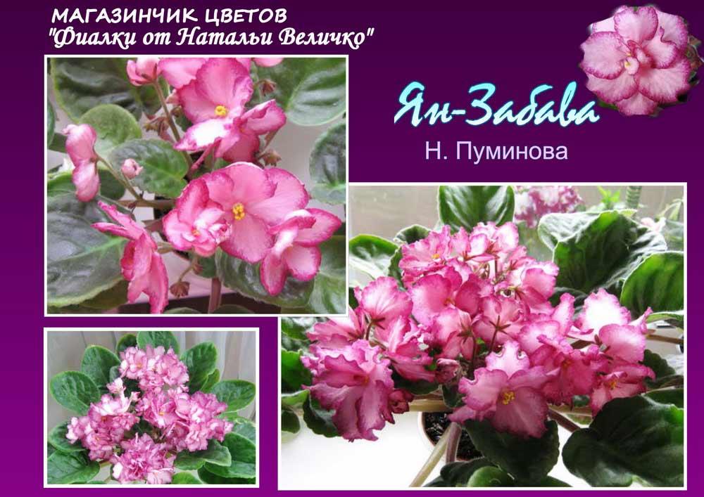 Ян-Забава (Н. Пуминова)