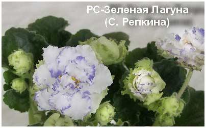 РС-Зеленая Лагуна С. Репкина