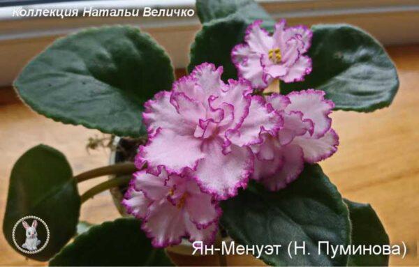 Ян-Менуэт (Н. Пуминова)
