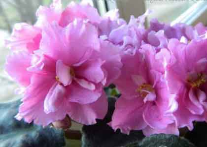 ек-волшебница весна е. коршунова