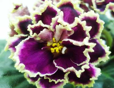 Каменный Цветок (К. Морев)