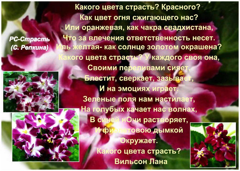 РС-Страсть (С. Репкина)