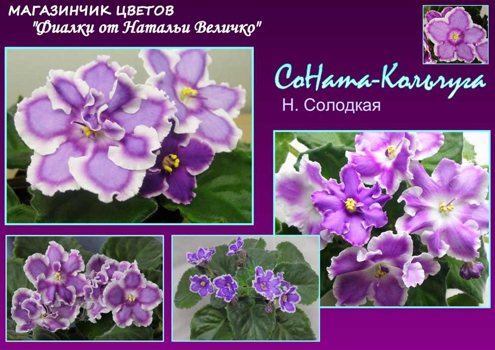 СоНата-Кольчуга (Н. Солодкая)