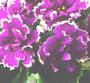 ЕК-Малахитовая Орхидея (Е. Коршунова)