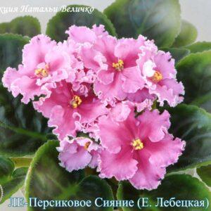 Ле-Персиковое Сияние (Е. Лебецкая)