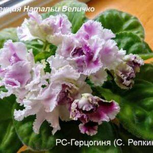 РС-Герцогиня С. Репкина