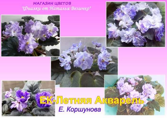 ек-летняя-акварель-коршунова