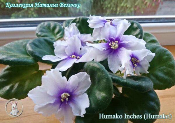 Humako Inches (Humako)