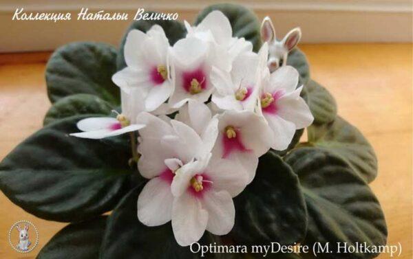 Optimara myDesire (M. Holtkamp)