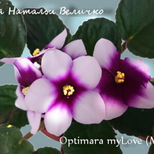 Optimara myLove (M. Holtkamp)