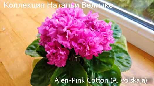 Ален-Pink Cotton(А. Вольская)