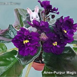 Ален-Purpur Magic (А.Вольская)