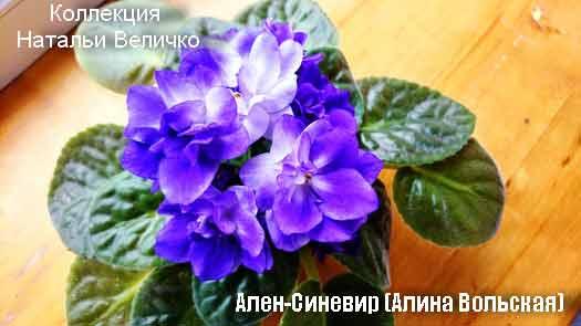 Ален-Синевир (А. Вольская)