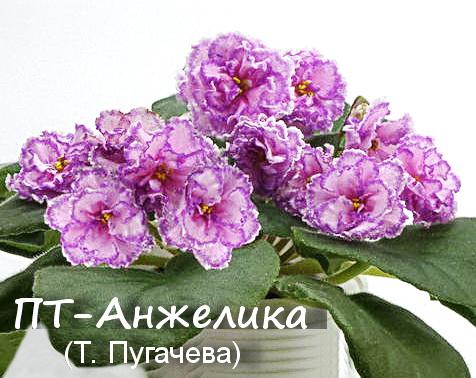 ПТ-Анжелика (Т. Пугачева)