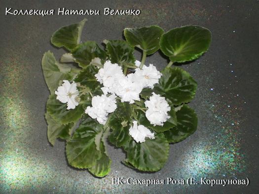 ЕК-Сахарная Роза Е. Коршунова