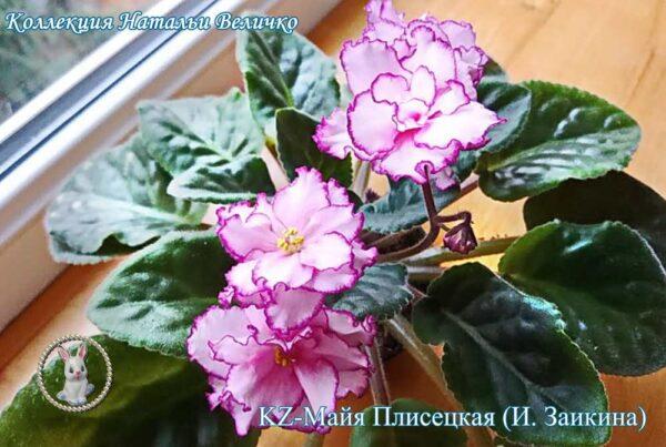 KZ-Майя Плисецкая (И. Заикина)