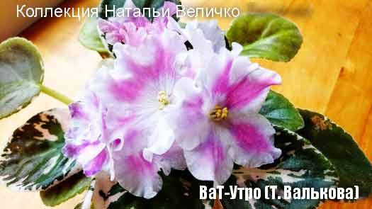 ВаТ-Утро (Т. Валькова)