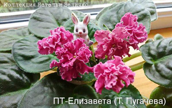 ПТ-Елизавета (Т. Пугачева)
