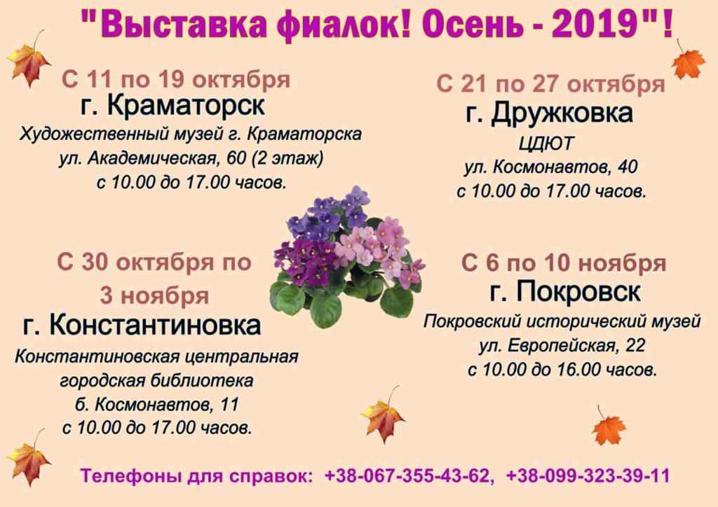 выставка фиалок осень