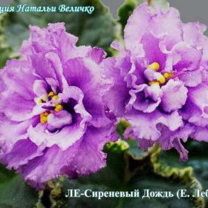 ЛЕ-Сиреневый Дождь (Е. Лебецкая)