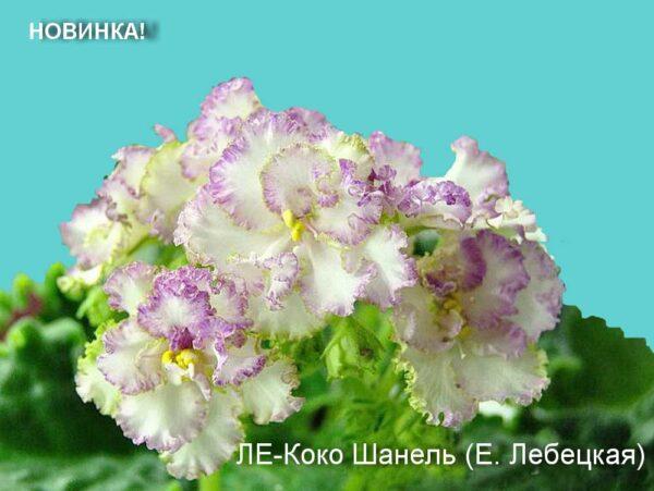 ЛЕ-Коко Шанель (Е. Лебецкая)
