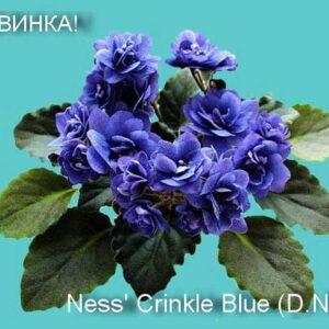 Ness' Crinkle Blue (D. Ness)