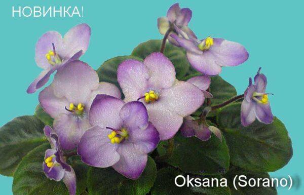 Оksana (Sorano)