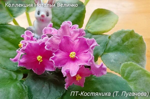 ПТ-Костяника Т. Пугачева