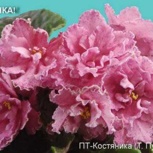 ПТ-Костяника (Т. Пугачева)