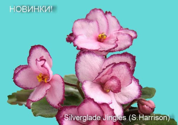Silverglade Jingles (S. Harrison)