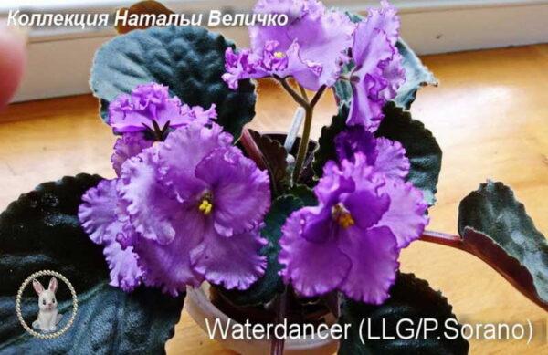 Waterdancer (LLG/P. Sorano)