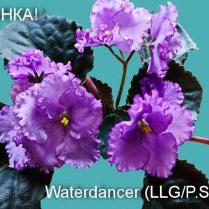 Waterdancer (LLG/P.Sorano)