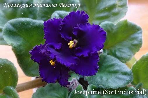Josephine (Sort industrial)