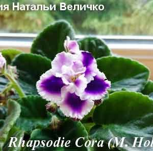 Rhapsodie Cora
