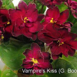 Vampire's Kiss (G. Boone)