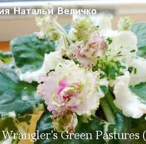 Wrangler's Green Pastures