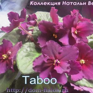 фиалка Taboo