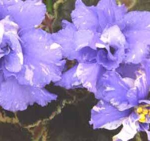 ЕК-Голубой Бриллиант (Е.Коршунова)