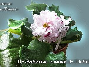 ЛЕ-Взбитые сливки (Е. Лебецкая).